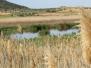 Aves en los humedales de los Serranos. La Guardia (Toledo)