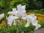 Flores en Mayo en el Jardin Botanico de Madrid