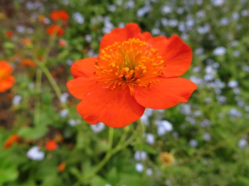 Flores en mayo en el jard n bot nico - Fotos de flores de jardin ...
