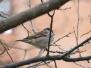 Pájaros con zoom x50