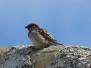 Pájaros en la Glorieta de La Guardia (Toledo)